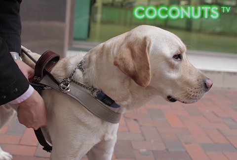 Hong Kong Seeing Eye Dogs